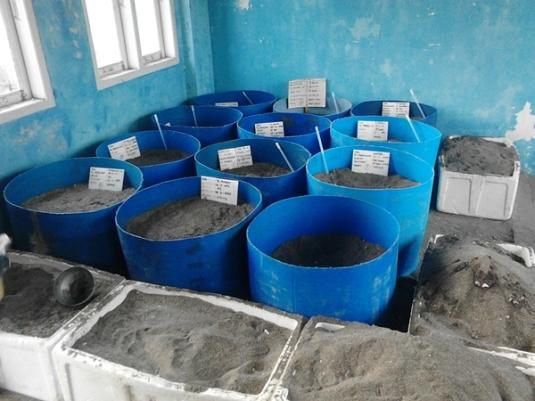 konservasi penyu pantai pariaman sumbar (4)